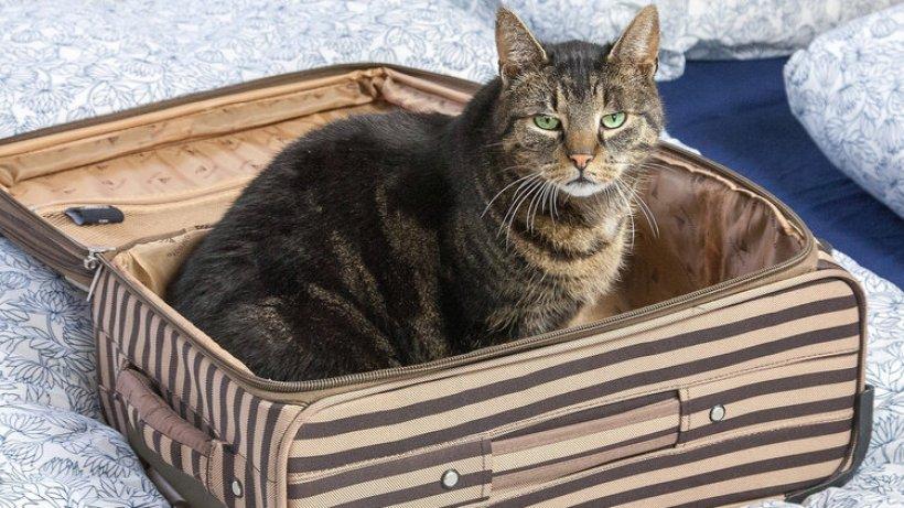 weil katzen nicht gern auf reisen gehen bergedorfer zeitung. Black Bedroom Furniture Sets. Home Design Ideas