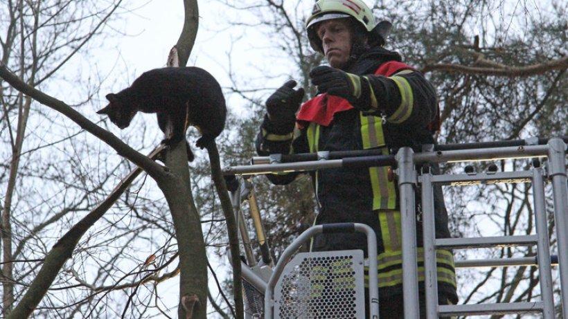 feuerwehr rettet katze aus baum